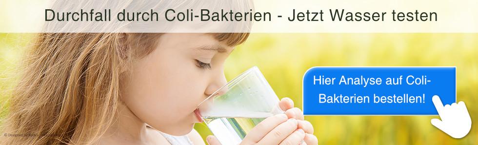 Coli-Bakterien